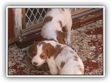 5-10-2012 puppy photos 029