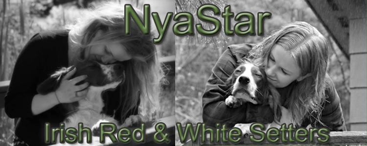 NyaStar Irish Red & White Setters